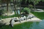 krokodilpark1_150